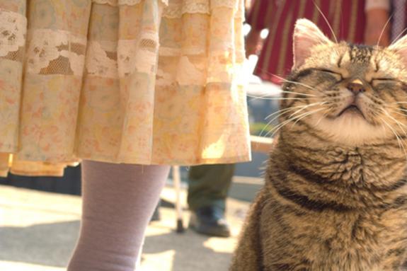 <고양이와 할아버지> 티저 예고편 & 보도스틸 공개! 고양이 타마와 집사 할아버지의 행복 프로젝트 시작!